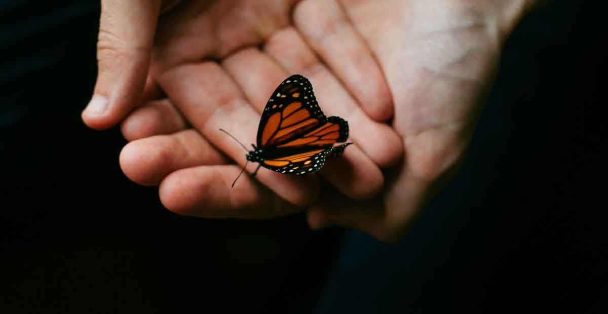orange butterfly landing on you meaning