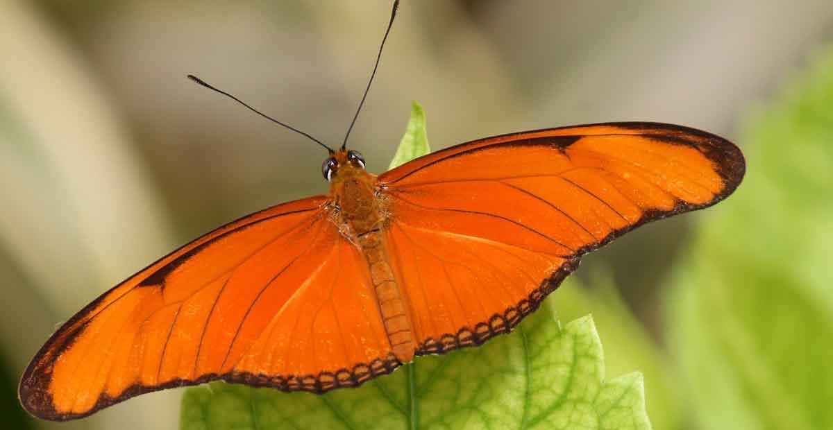 Orange butterfly meaning