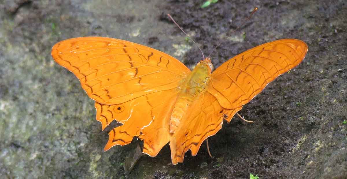 seeing a orange butterfly inside house meaning
